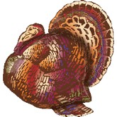 "28"" Sophisticated Turkey Jumbo Balloon"