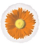 "18"" Orange Daisy MagiColor"
