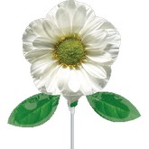"14"" Airfill Photographic White Daisy Balloon"